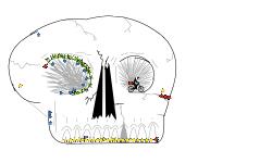 skull trackK
