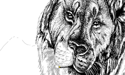 Lion Map