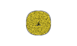 Coin (for my subs)