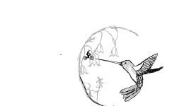Hummingbird (finished)