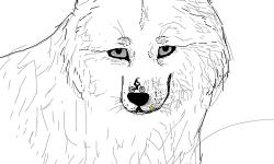 epic wolf =D
