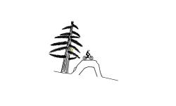 Detailed Pine Tree